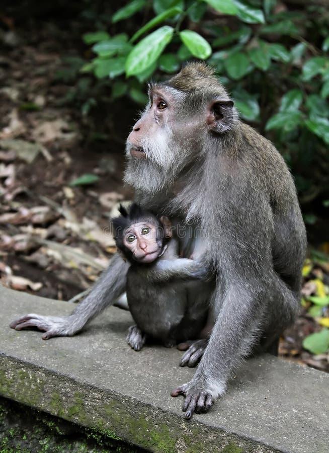 De baby van de aap met haar moeder royalty-vrije stock foto's