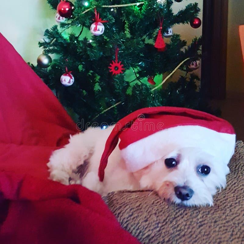 De baby van de Kerstmistijd stock foto