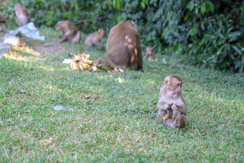 de babyaap eet banaan dichtbij groep stock afbeelding