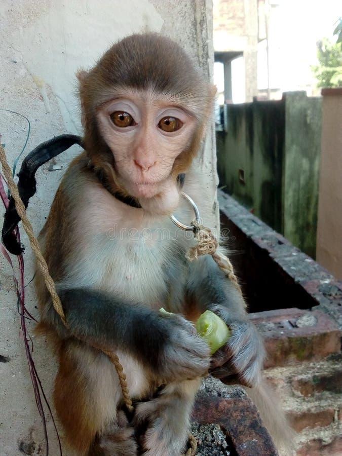 De babyaap eet druif stock foto