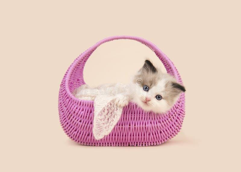 De babykat van de voddenpop met blauwe ogen die over de rand van een roze mand op een gebroken witte achtergrond hangen royalty-vrije stock afbeelding