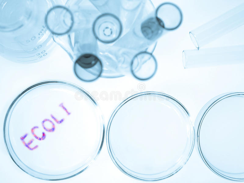 De bacteriën van Ecoli royalty-vrije stock foto