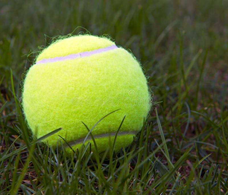 De Bal van het tennis op Natuurlijk Gras royalty-vrije stock foto's