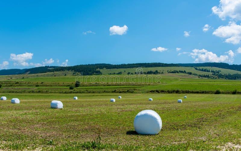 De balen van het Alfalahooi op landbouwdiegebied in wit plastiek wordt verpakt stock foto