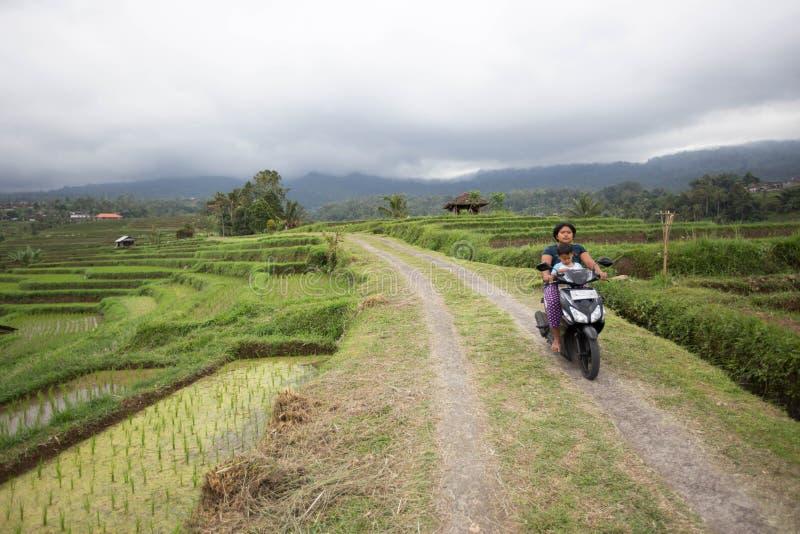 De Balinese vrouw berijdt een autoped met haar kind in de rijstterrassen van Bali royalty-vrije stock foto's