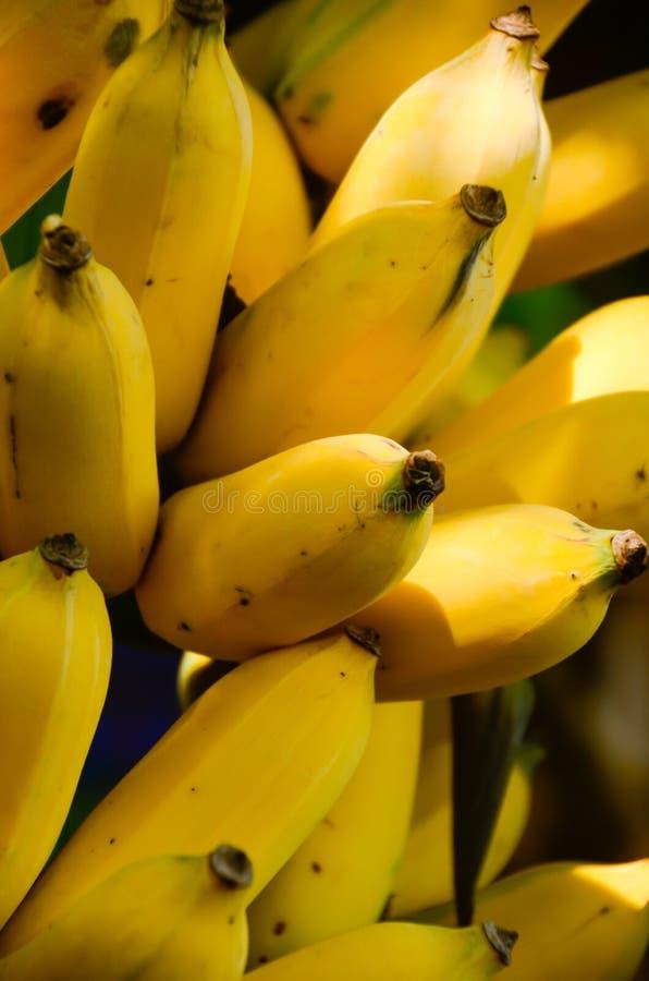 De banaan is fruit dat energie waarschijnlijk niet kan een worden, maar gelooft het of niet, de belangrijkste reserves van banaan royalty-vrije stock fotografie