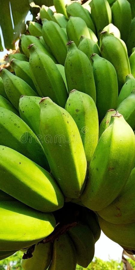 De banaan is nog niet rijp royalty-vrije stock fotografie
