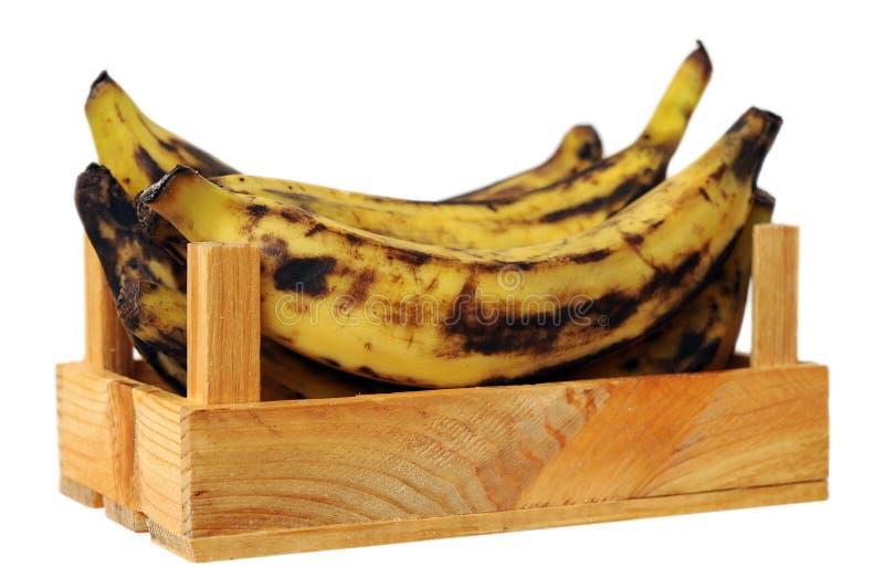 Download De banaan van de weegbree stock afbeelding. Afbeelding bestaande uit geval - 29511205