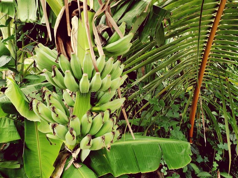De banaanzijstraat van Thailand stock foto's