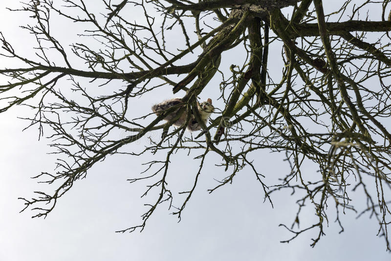De bang gemaakte kat zit op een hoge droge boom stock afbeeldingen