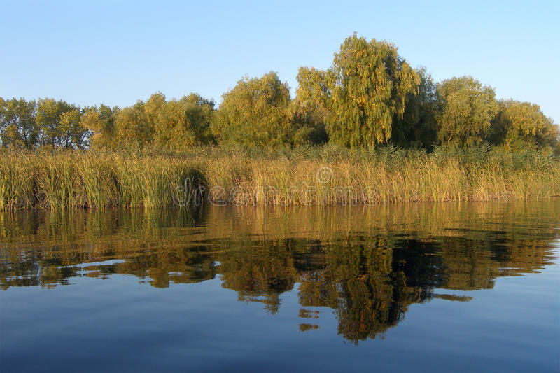 De bank van de rivier met bomen royalty-vrije stock afbeeldingen