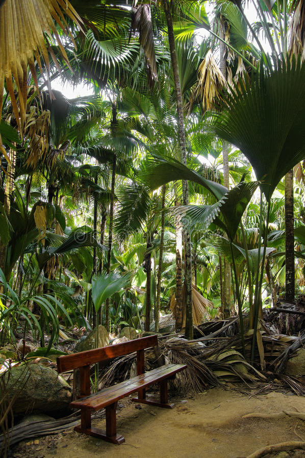 De bank in wildernis, Vallee DE MAI royalty-vrije stock afbeeldingen