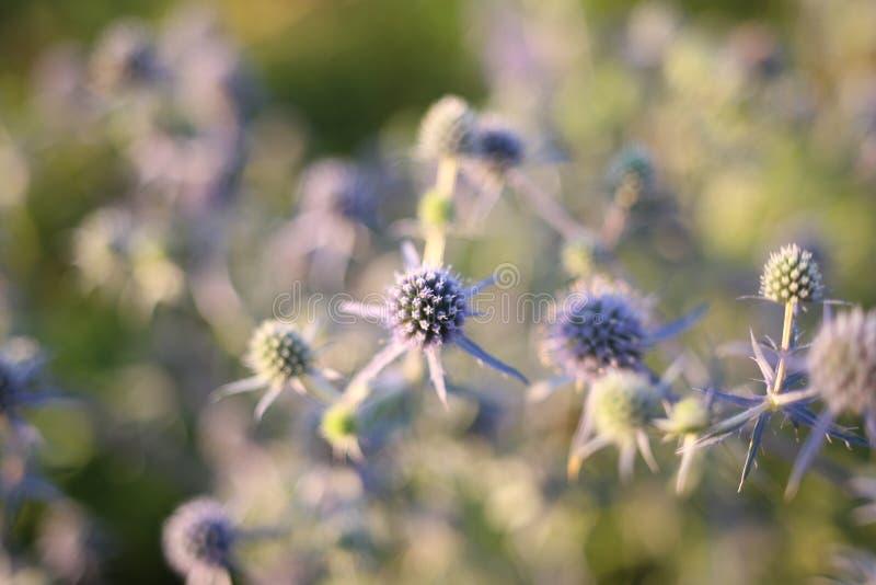 De Banner van bloemen Background royalty-vrije stock fotografie