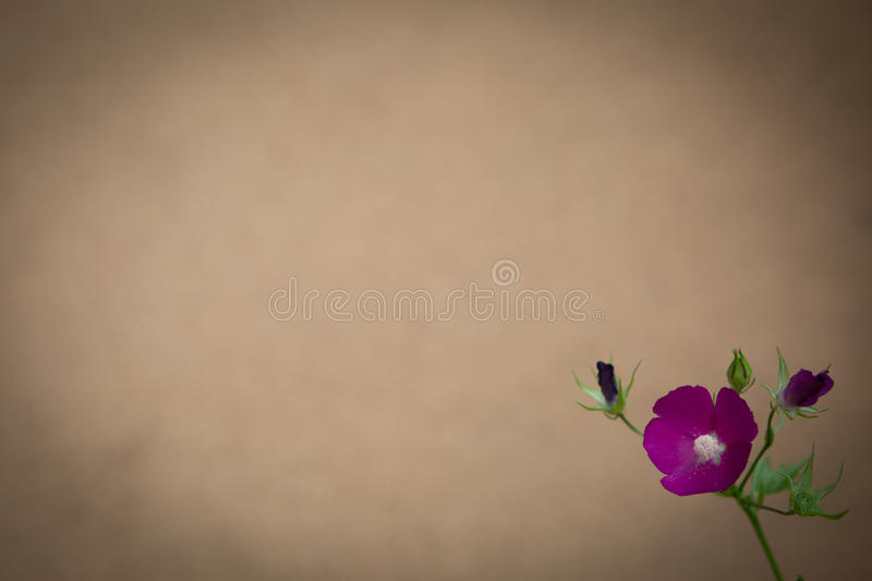 De Banner van bloemen Background stock afbeeldingen