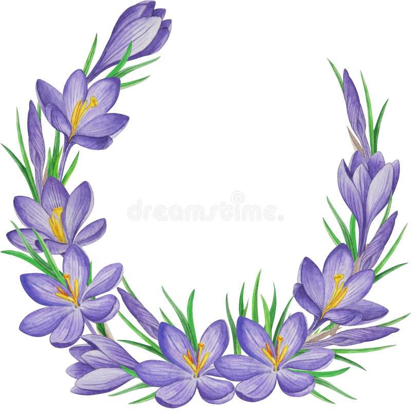 De banner van de de lentebloem van krokussen De achtergrond van de waterverf vector illustratie