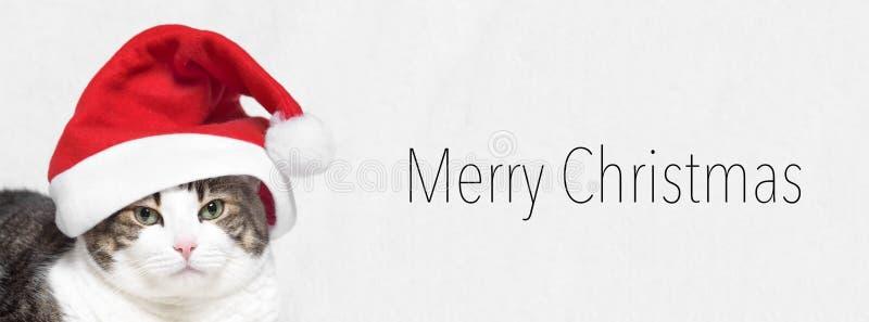 De Banner van Kerstmis Aanbiddelijke Kat in de hoed van de Kerstman Vrolijke Kerstmis van de tekst stock foto's