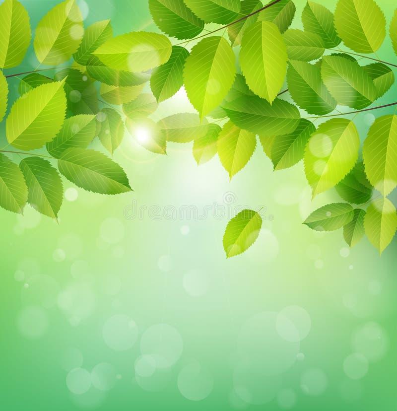 De banner van de de lenteaard met groene bladeren stock illustratie
