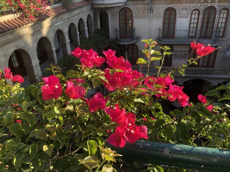 De beaux bougainvilliers ornent le balcon image libre de droits