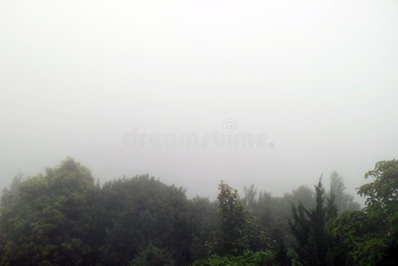 De beboste achtergrond van het bergonduidelijke beeld stock afbeeldingen