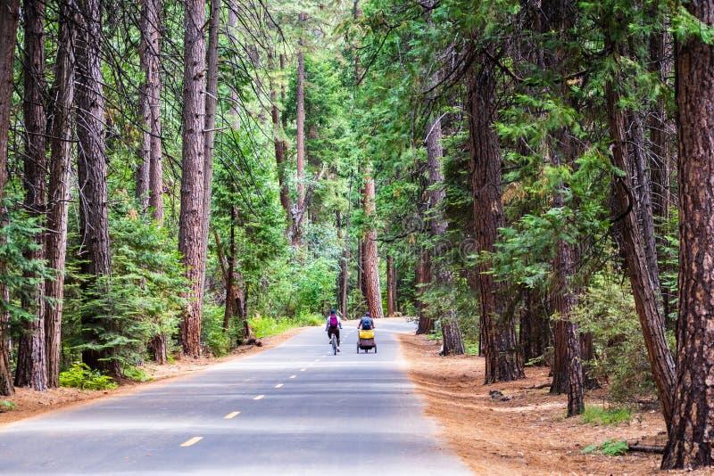 De bedekte weg sloot aan openbaar verkeer, die door een altijdgroen bos in Yosemite-Vallei gaan; Yosemite Nationaal Park, Sierra  stock afbeeldingen
