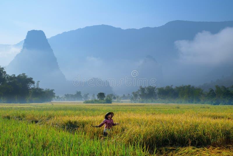 De bedelaars zijn Meren/Vietnam, 04/11/2017: De traditionele Vietnamese vrouw met kegelhoed het oogsten rijst voor mist behandeld royalty-vrije stock foto's