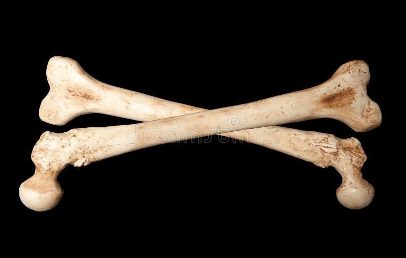 De beenderen van het skelet stock afbeelding