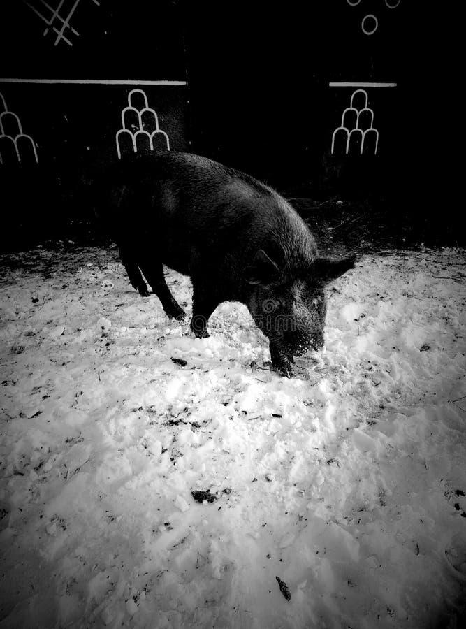 De beer in de winter op een gang stock fotografie