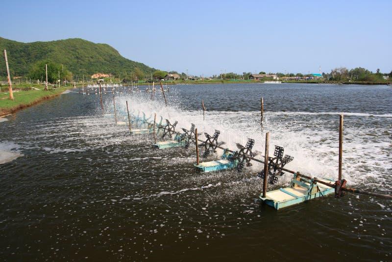 De behandeling van het water van garnalenlandbouwbedrijf. stock foto