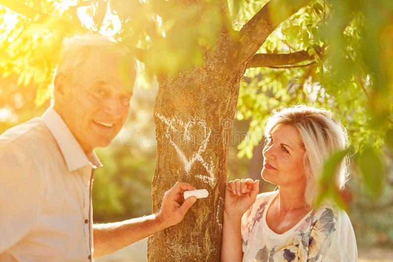 De bejaarden in liefde trekken een hart op een boom stock afbeeldingen