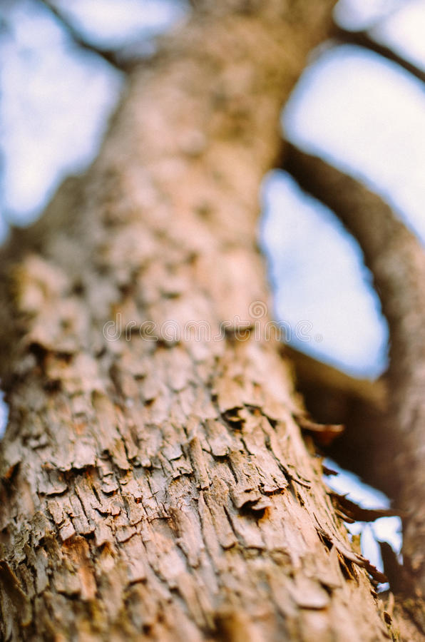 De belangrijkste boomstam van de boom met schors, het vertakken zich royalty-vrije stock fotografie