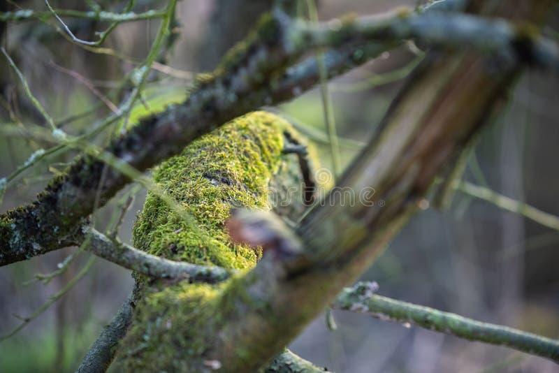 De belangrijkste nadruk is op bomen in verschillende situaties stock foto