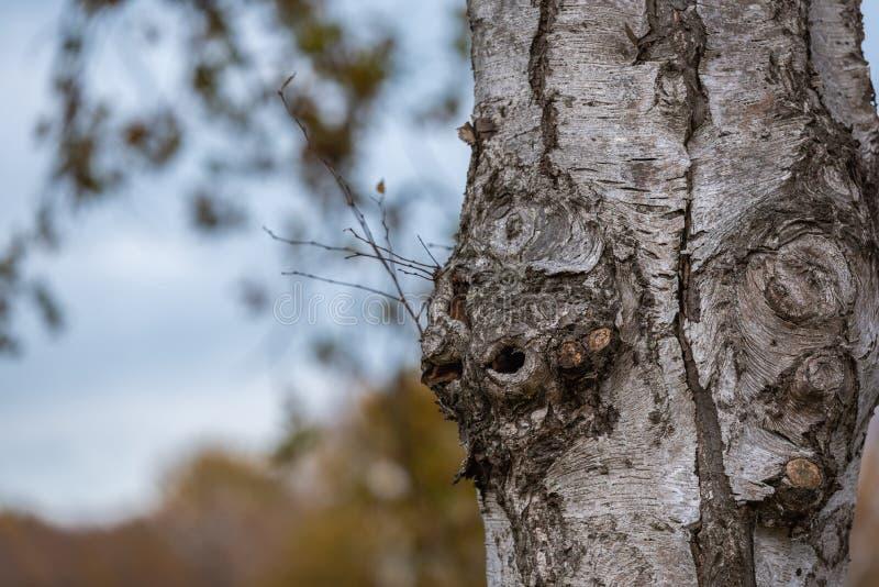 De belangrijkste nadruk is op bomen in verschillende situaties stock afbeeldingen