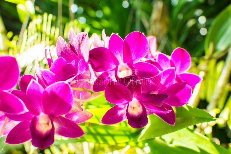 De belles orchidées jaunes et roses sur une branche avec le gree trouble photo libre de droits