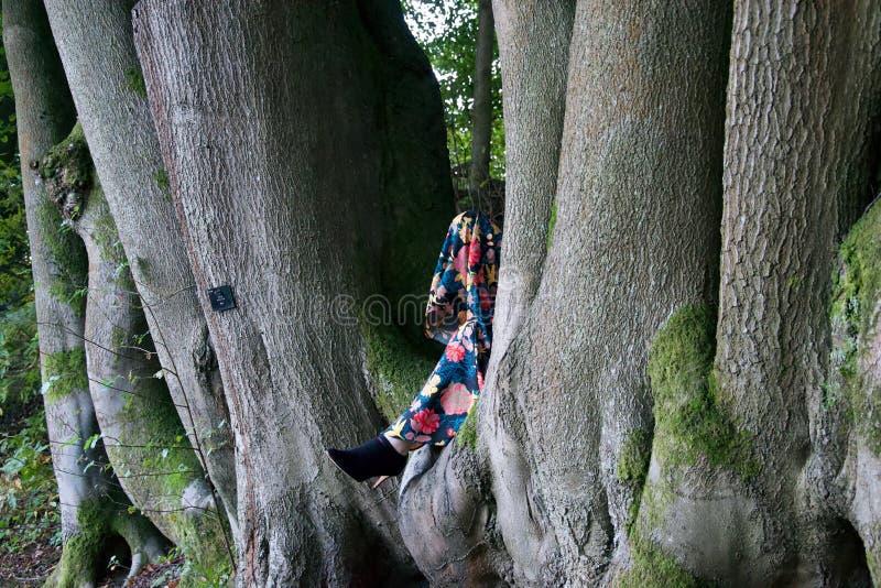 De benen van de dame in gespleten van beukbomen royalty-vrije stock afbeeldingen