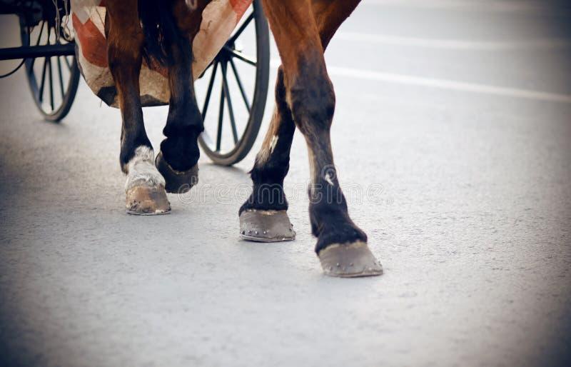 De benen van een bruin paard rustten aan een vervoer uit stock foto's