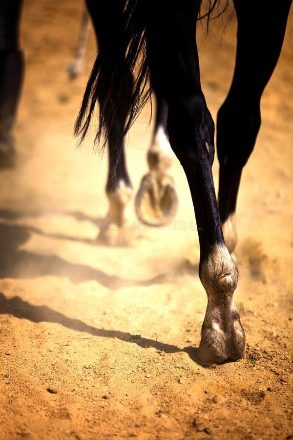 De benen van het paard