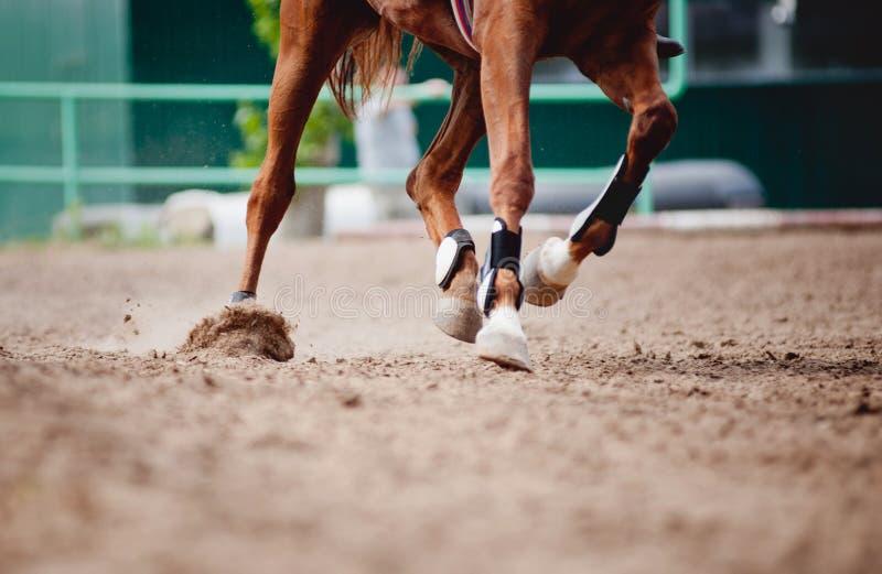 De benen van het paard het Lopen stock foto