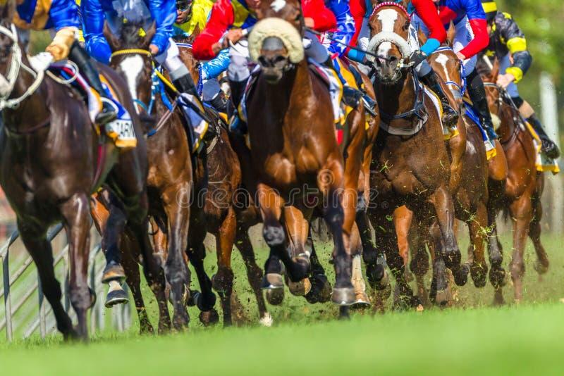 De Benenactie van Hoofs van paardenrennendieren royalty-vrije stock afbeelding