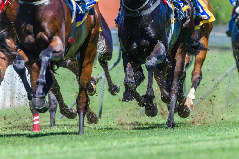 De Benengras van Hoofs van het paardenrennenclose-up stock afbeelding