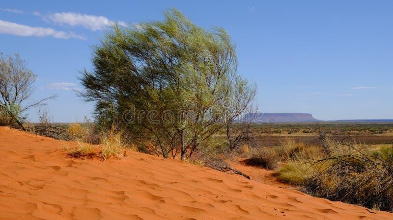 De berg Conner in binnenland op de horizon, zonnige dag van de lijstbovenkant op Noordelijk Grondgebied Australië royalty-vrije stock afbeeldingen