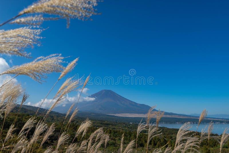 De berg Fuji zonder sneeuw behandelt zijn piek vanuit een gezichtspunt rond Wanakako-meer in een ochtend stock foto's