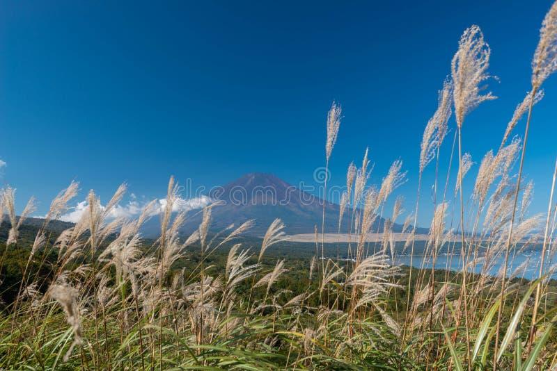 De berg Fuji zonder sneeuw behandelt zijn piek vanuit een gezichtspunt rond Wanakako-meer in een ochtend met bruin gras in voorgr stock foto