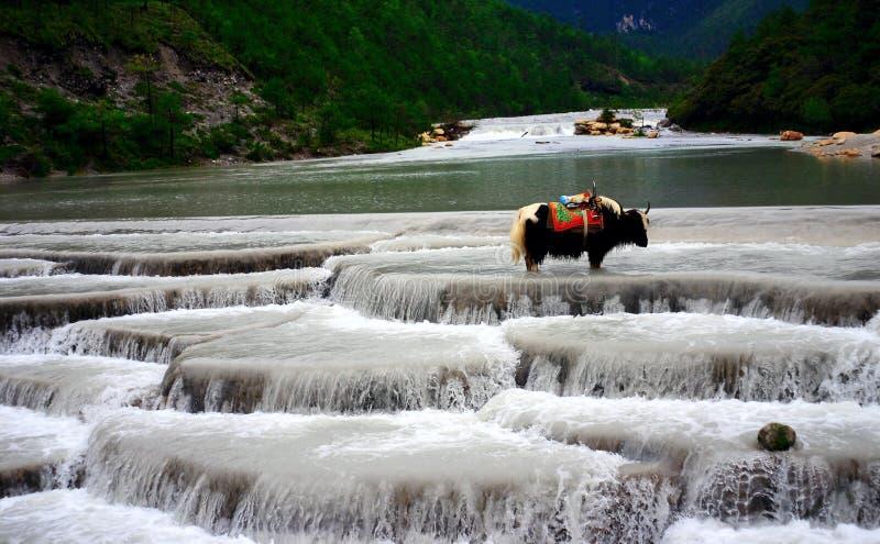 De berg-jakken van de Sneeuw van Yulong stock foto's