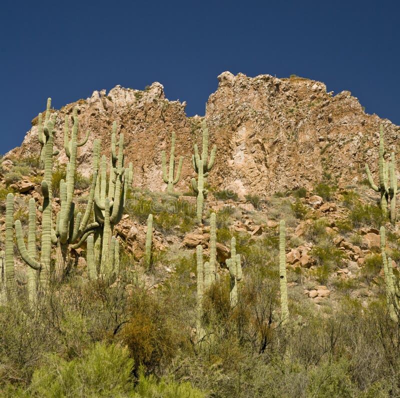 De Berg van Arizona en Cactus Saguaro stock fotografie