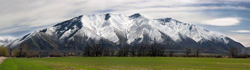 De Berg van de esdoorn stock foto's