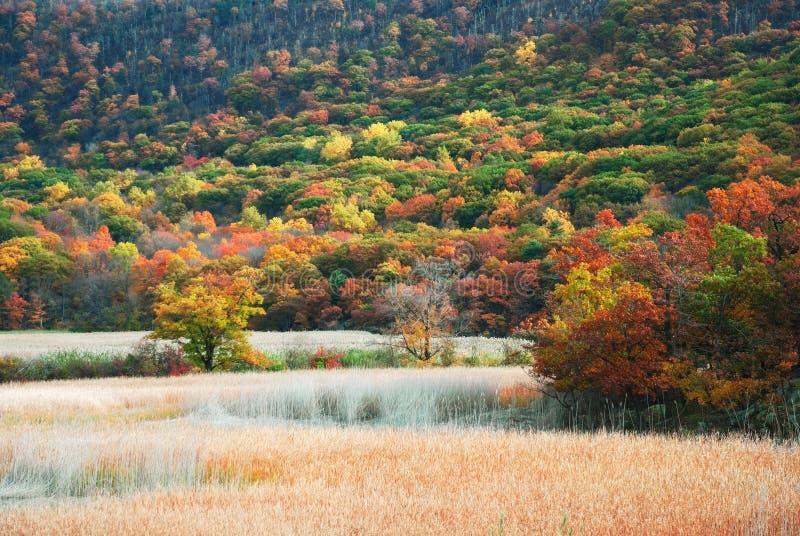 De Berg van de herfst royalty-vrije stock afbeelding
