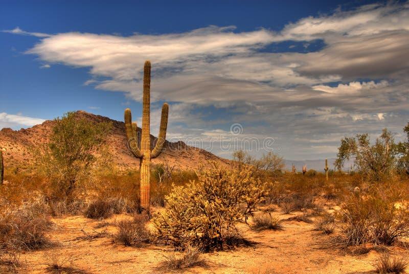 De Berg van de woestijn stock foto