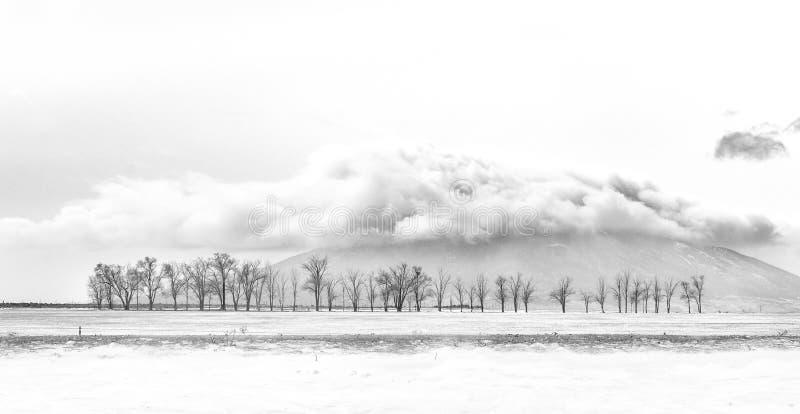 De berg van Ute met bomen en wolken royalty-vrije stock foto