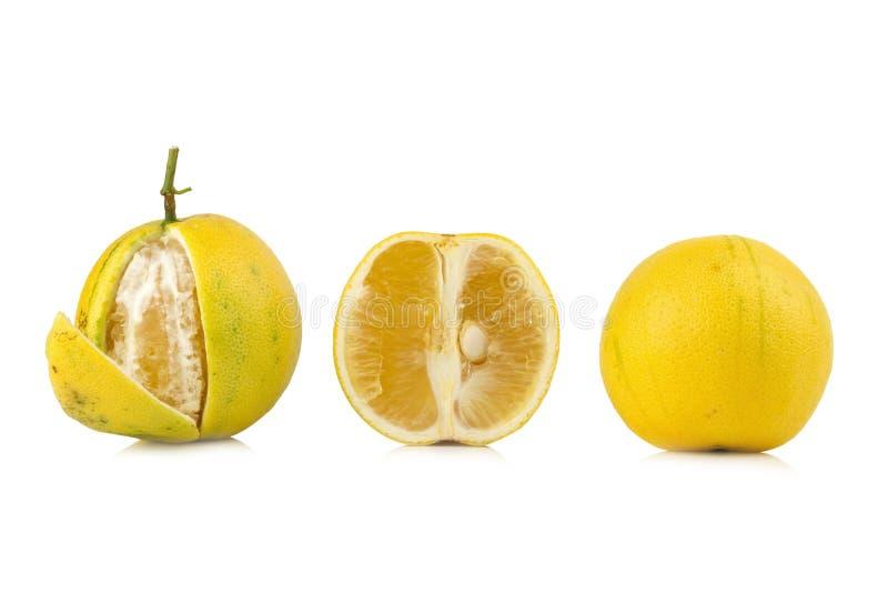 De bergamotbomen kleuren geel geïsoleerd op witte achtergrond stock afbeelding