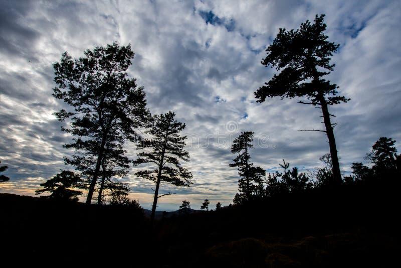 De Bergbomen van Michaux-het Bos van de Staat in Pennsylvania in FA royalty-vrije stock afbeelding
